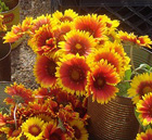 West Tisbury Farmers Market 2014