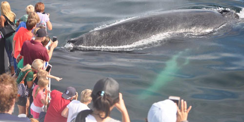 Whale Watch Tours 500x250 - Captain John Whale Watch & Fishing Tours - Plymouth, MA