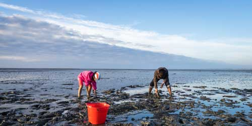 Shellfishing and Clamming in Massachusetts-credit-shutterstock