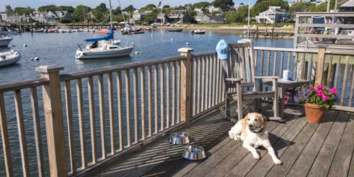 Nantucket Island Resorts and Hotels Pet Friendly Nantucket MA