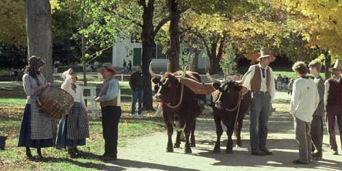 Oxen on the Common - Old Sturbridge Village - Sturbridge, MA