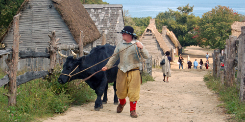 Austin & the Bull at Plimoth Patuxet - Plymouth County, MA