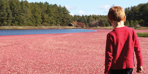 AD Makepeace Cranberry Bog - Plymouth County, MA